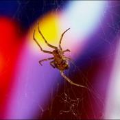 L araignée