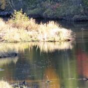 Octobre sur la ruisseau