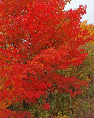 automne Mascouche, QC