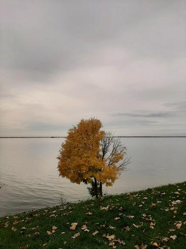 Perdre ses feuilles 🍂 Châteauguay, QC