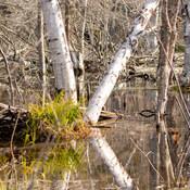 Reflets/Parc National Forillon