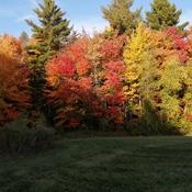 beau paysage d'automne