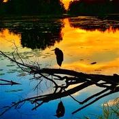 Lagoon sunset heron