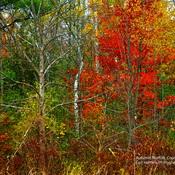 Norfolk County Ontario Canada