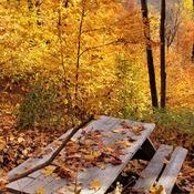 pic nic en forêt
