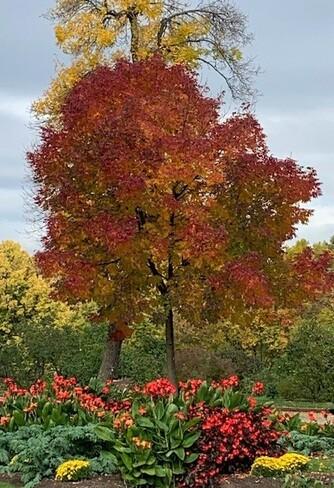 Mariage été automne Jardin botanique de Montréal, Rue Sherbrooke Est, Montréal, QC