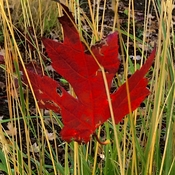 Autumn Leaf's Landing M.O.