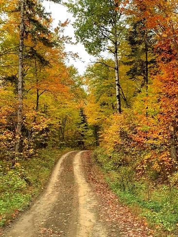 forêt Menneval, NB