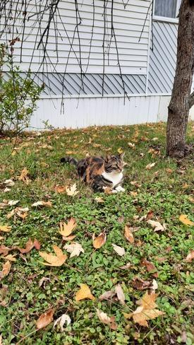 Camouflage d'automne! Adamsville, QC