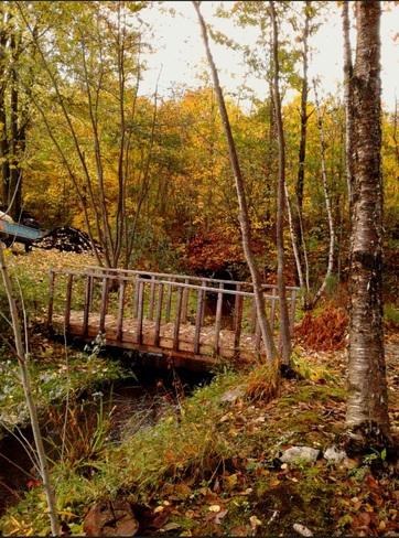 Petit pont dans mère nature! Adamsville, QC
