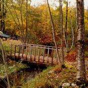 Petit pont dans mère nature!