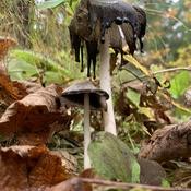 Mushrooms hunting in October