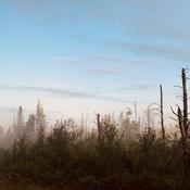 Misty morning beauty