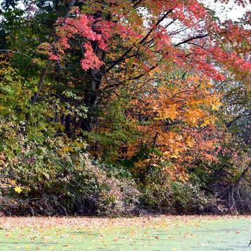 Tapis de feuilles.....