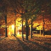 Des tas de feuilles.