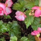 flowers at Queen Elizabeth Park