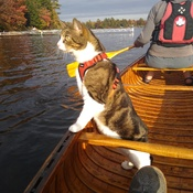 Canoeing with the Colonel