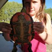 turtles are butyfful