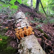 too cute mushrooms