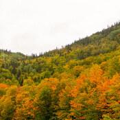 L'automne/Côte de la Madeleine, Gaspésie