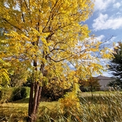 Oct 15 2021 17C Happy Friday everyone:) The beauty of Fall colors in Thornhilll