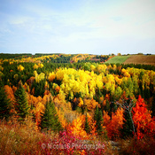 automne foret
