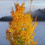 Morning at Horne Lake, Elliot Lake.