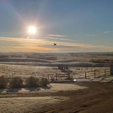 Frosty Morning near Lousana, AB