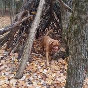 Frankie loves camping!