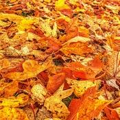 Lotsa Leaves