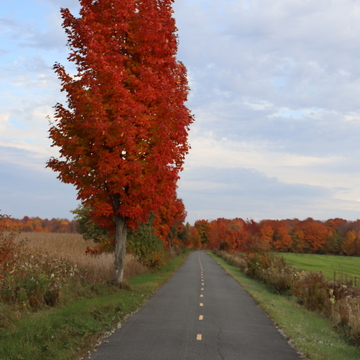 Piste cyclable en automne