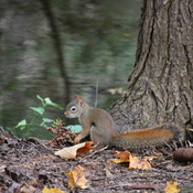Foraging in the Forest