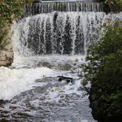 Falls Bounty at Rockwood Conservation