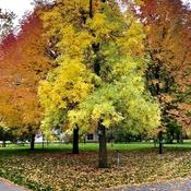 Autumn colours!!