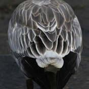 2021-10-16 - Beauty of Snow Goose Feathers in Esquimalt Lagoon