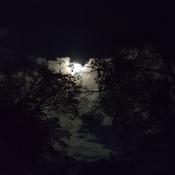 Moon Peering Through Trees