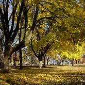 Autumn colours in Monarch Park