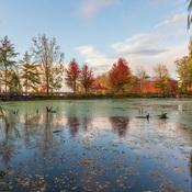 Turtle Pond trees