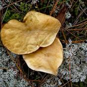 Mushrooms, Elliot Lake.