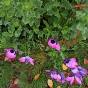 flowers after heavy rainfall