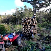 In the forest cutting and piling firewood, will haul it out in winter