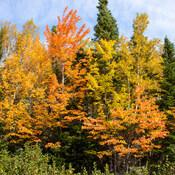 Le Parc national Forillon et ses couleurs