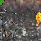 Tounes d'automne (Face A)