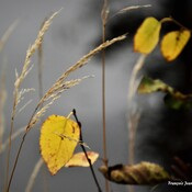 Tounes d'automne (Face B)