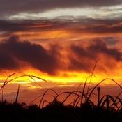 Jack Pine Trail at sunset!