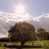 Springridge Farms