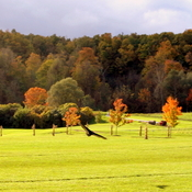 Springridge Farm