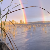 Brightest I've ever seen Rainbow, from the duck blind!
