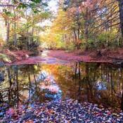 Autumn in Centennial Park