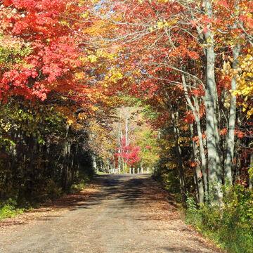 Entering the Irishtown Trail